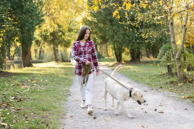 Mejorar los paseos con mi perro