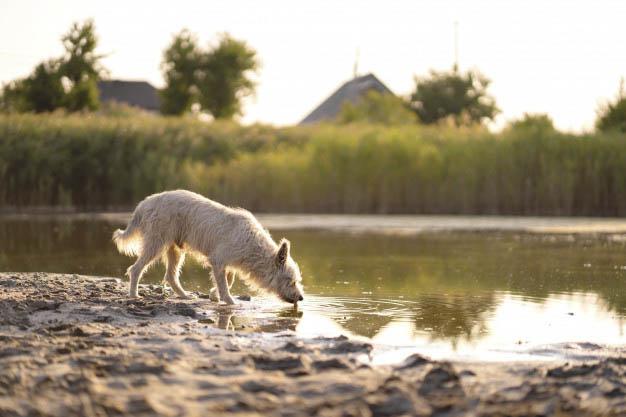Prevenir la deshidratación de mi perro